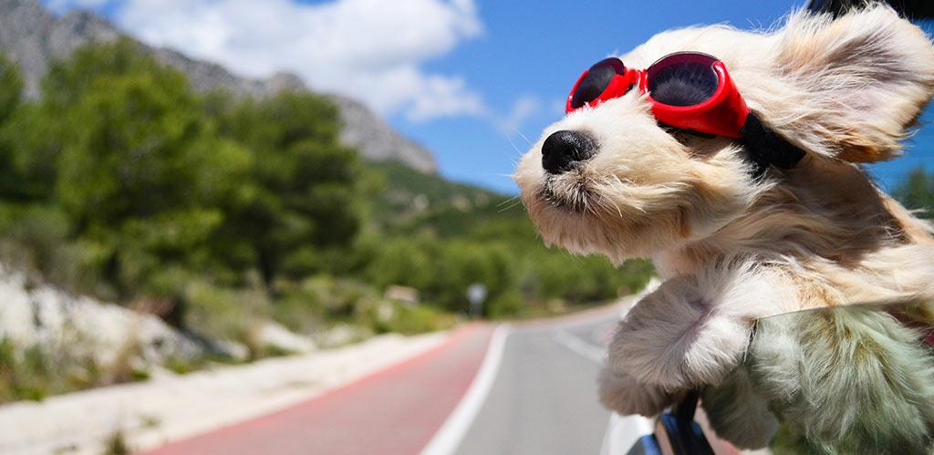 Consejos para facilitar viajes mascota